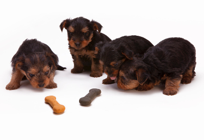puppies white background bone