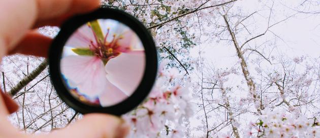 examining flower insights